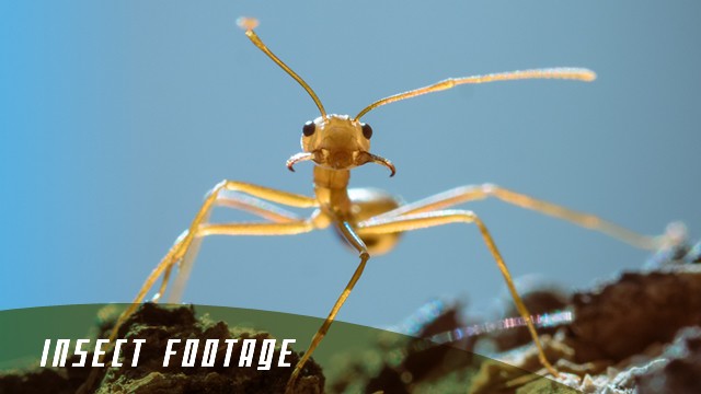 stock footage philippines france insects